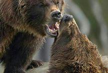 Bears - all sorts