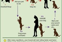 Dog Training Tips / How to train your dog