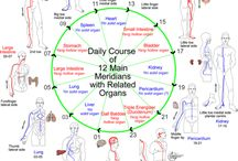 Meridians and Organs