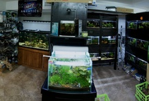 Aquarium Stores and Garages