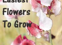 How to Grow Flowers
