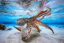 Photos sous marine
