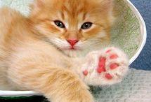 Kittens / by Charlotte Buzinski