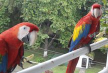 JACO BEACH COSTA RICA Breakfast with the Birds / This is new Tour and event that you can do in Jaco beach Costa Rica. It is an Early morning breakfast where you are going to see many tropical birds close up natural. Eat a great Tropical breakfast in a private home. For more information Contact Cacaoloungecr@gmail.com / by Marianna Love