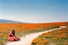California Poppies/Orange is a Beautiful Color / by Sarah Pauly