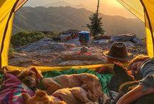 Pets Camping