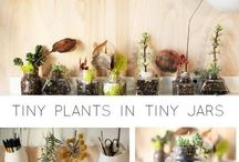 mini giardino piante grasse