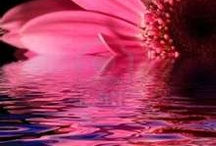 PiNk BeaUty / by Angie Barnett