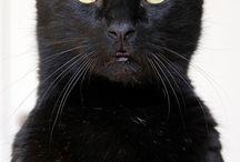 cat,cat,cat / ◾️▪️My favorite cat's photo▪️◾️