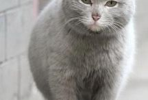коты толстяки