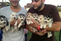 Very cut puppy's