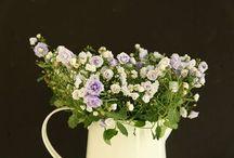 Wirtualny Florysta - doradztwo / Wirtualny Florysta - doradzanie w czasie rzeczywistym w zakresie układania kompozycji kwiatowych www.florysta3d.pl