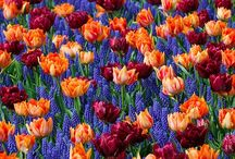 How to Take Photos of Flowers / Flowers, gardening and how to take photographs of flowers. If color and beauty is what you're looking for this is the board for you. Some inspirational photos of flowers to get you inspired