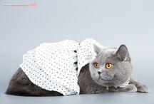 Питомник британских кошек ELIZABETH CORALL / В нашем питомнике Вы сможете найти для себя не только чудесного котенка ,но и узнать много интересного о кошках и не только.