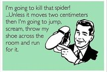 SPIDERS OMG