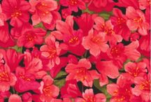 Flowers Are A Girl's Best Friend / Grow something beautiful with these floral cotton fabrics.