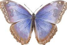 Butterflies / Free graphics of butterflies for digital scrapbooking or Bible journaling