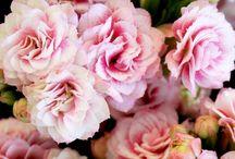 FlowerTrials® | KP Holland