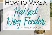 Dog Feader