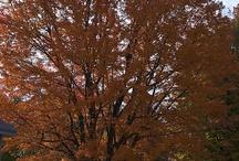 Autumn in Mt. Washington Valley