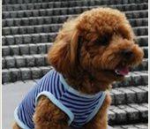 Dog Jersey Patterns