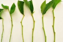Množení rostlin