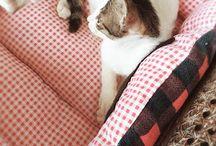 Hello Kitty Cat!