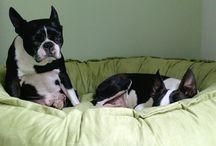 GLÜCKLICHE KUNDEN | KENSONS for dogs / Schaut Euch unsere glücklichen und teilweise recht schläfrigen Kunden an! Sind sie nicht toll? :)