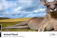 Facebook omslagfoto's / Een selectie van leuke en mooie Facebook omslagfoto's