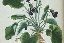 Sacred Plant Medicine / by Rhonda Zoch