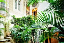 Outdoor Greenery,Gardens,Etc / by C Hernandez