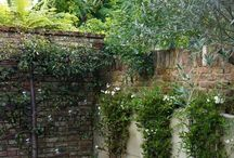 Eatable Landscaping / This board is about using fruit/ nut trees, vegetables and herbs as landscaping around the home.