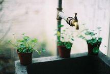 gardening..