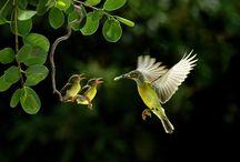 Bird / by Eiji Yamamoto