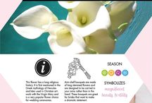 WEDDINGS - Celebrate love with orchids! / Bouquets, centerpieces, cake designs with orchids for a celebration to remember.