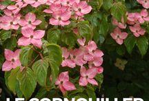 Jardin : Arbustes terre acide