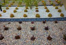 Drought tolerant gardens