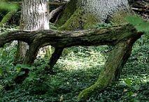 Skogsstig Norra Fällöudden
