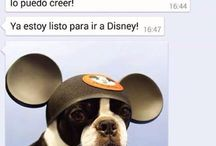 Perro WhatsApp