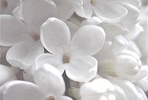 ~ white lilac ~ / by Putu Sita