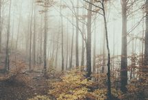 Fairytales & Forests