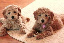 My Future Puppy