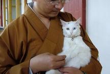 THAILAND-Коты