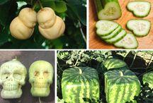 Moules à fruits / Amusez-vous à cultiver des fruits aux formes extraordinaires grâce à nos moules à fruits : http://www.alsagarden.com/fr/135-moules-à-fruits
