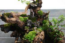 流木 植物