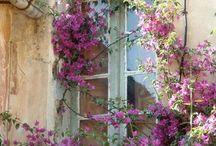 # Ogrody | gardens # 1