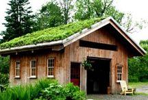 toiture vegetale