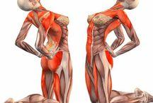 Mușchi corpului uman
