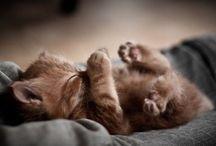 Amazing Cuteness