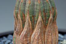 Suculentas exóticas - falsos corais / Parecem do mar. Mas são da terra mesmo! Suculentas lindas que lembram corais, anêmonas e ouriços <3